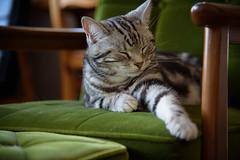 DSC_5894 (catfish.boogie) Tags: japan cat sapporo hokkaido nikkor24120mmf4gedvr nikond750
