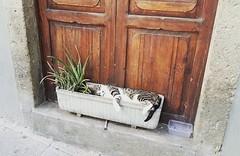 Siesta (heteis) Tags: gato siesta relax viaje