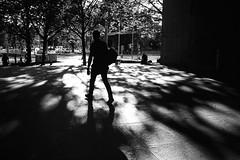 tree shadows (gato-gato-gato) Tags: 35mm asph ch iso200 ilford leica leicamp leicasummiluxm35mmf14 mp mechanicalperfection messsucher schweiz strasse street streetphotographer streetphotography streettogs suisse summilux svizzera switzerland wetzlar zueri zuerich zurigo zrich analog analogphotography aspherical believeinfilm black classic film filmisnotdead filmphotography flickr gatogatogato gatogatogatoch homedeveloped manual rangefinder streetphoto streetpic tobiasgaulkech white wwwgatogatogatoch zrich leicam6 m6 manualfocus manuellerfokus manualmode schwarz weiss bw blanco negro monochrom monochrome blanc noir strase onthestreets mensch person human pedestrian fussgnger fusgnger passant zurich