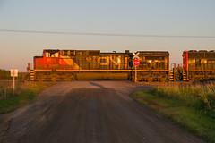 16-7365 (George Hamlin) Tags: minnesota sax railroad freight train manifest general electric diesel locomotive broadside sunset canadian national northbound cn grade crossing photo decor george hamlin photograpy