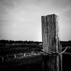 (Nico_1962) Tags: dof bokeh nederland wood texture fence leica m240 summarit overijssel barbedwire prikkeldraad thenetherlands rangefinder manualfocus summarit35mm hout bw zwartwit minimal minimalism