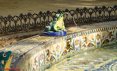 Rana / Frog in a Pond (Juanito Moore ( John Moore )) Tags: sevilla spain espaa crdoba girl sun shine blue sky buildings medieval lagiralda catedral cathedral river guadalquivir architecture pretty stunning shorts reflections flowers shadows people chinese frog animals colour photo foto photographer fotgrafia