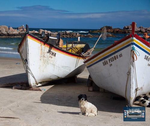 Cão de guarda. Laguna. Brasil.   #jucalodetti #santacatarina #sulcatarinense #viversc #suldobrasil #turismonosul #galeriasc #doleitordc #canont1i #ig_santacatarina #retratosdesantacatarina #viajandosc #ceuazul #ciel #cachorro #caodeguarda #canoa #batera #