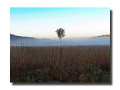 Autumn Fog (Hold still) Tags: autumn fall fog earlymorning missouri elements squawcreeknationalwildliferefuge