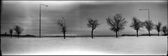trees (Foide) Tags: pano panoramic pinhole 120film 1617 filmfilmforever f233 realitysosubtle rss141