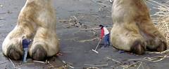 1463 (Jasper Kyodaina) Tags: man guy feet giant paw squish sole stomp crush giantess trample