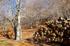 Sur les pentes de la Montagne de Lure ... (Pascal Duvet) Tags: panorama nature montagne alpes automne 04 hiver provence pascal paysage vue duvet fort lure bois haute sommet