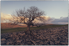 Last light on distant fells (Malajusted1) Tags: park sunset tree yorkshire pot national scar dales settle norber moughton smearsett feizor