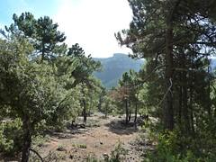 Sierra de Cazorla (J.S.C.) Tags: espaa landscape guadalquivir paisaje sierra bosque jan cazorla parquenatural