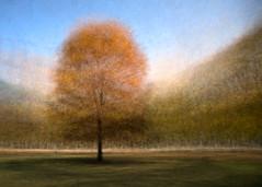 20141102-_DSC5325-362-Edit.jpg (Stephen D'Agostino) Tags: trees toronto queenspark montage impressionism impressionist fallcolours intheround photoimpressionism impressionistphotography daylighted