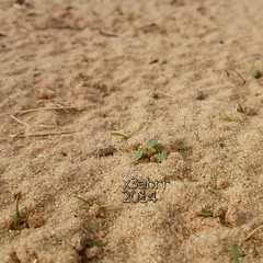 بداية #الربيع في #روضة #الخفس#كشته #مكشات #الرياض #السعودية #صباح_الخير #good_morning #colorful #hdr #nature #PicsArt (photography AbdullahAlSaeed) Tags: nature colorful goodmorning hdr كشته الربيع السعودية الرياض صباحالخير روضة الخفس مكشات