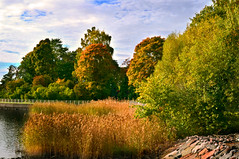 Autumn in Kesranta (mrclpix) Tags: autumn trees colors reeds helsinki kesranta