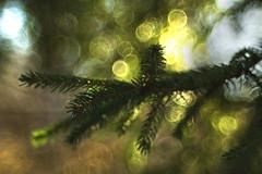 Christmas is coming (irina_escoffery) Tags: