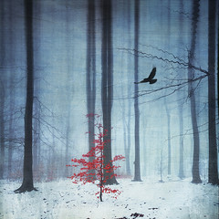 red tree (Dyrk.Wyst) Tags: schnee trees winter light sky mist snow painterly cold texture nature leaves weather misty fog composition forest photomanipulation square landscape licht mood nebel laub natur foggy surreal atmosphere manipulation dreamy abstraction minimalism conceptual wuppertal kalt landschaft wald bume bergischesland atmosphre humidity wetter stimmung trist redleaves redtree lowangle quadratisch solitarytree gebsch textur neblig creativephotography 2013 texturiert photoshelter vertorama