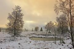 mystic light (frank-heinen-photographer) Tags: travel winter snow nature landscape reisen outdoor eifel swamp moor landschaft landschaftlandscape hohesvenn hautesfagnes sumpf hochmoor travelreisen moorswamp wwwfrankheinenphotographerde