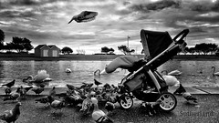 Baby Snatcher (Mark.L.Sutherland) Tags: cameraphone uk sky blackandwhite bw baby reflection bird water monochrome clouds flying wings pigeon pigeons united flight kingdom hampshire smartphone swans portsmouth sutherland buggy canoelake pram southsea pushchair flyingrat snatcher phoneography androidography galaxys5 enteredinsyb