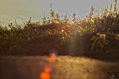 IMG_7943 (EifelFotografien) Tags: canon herbst feld blumen eifel makro blatt sonne baum hdr leben burg kurve nass extrem euskirchen traum schnell kommern faszination satzvey