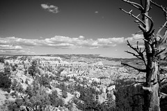 Temps suspendu (Pascalala) Tags: park blackandwhite bw usa tree landscape utah blackwhite nationalpark nikon noiretblanc nb brycecanyon paysage arbre parc noirblanc usnationalpark d610 tatsunis