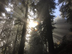 IMG_4591 (Dan Nevill) Tags: mountains alex nationalpark hiking hike trail northcascades maplepassloop
