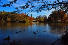 IMG_3908 (larrycloss) Tags: fall nikon centralpark bowbridge thelake nikond40x d40x