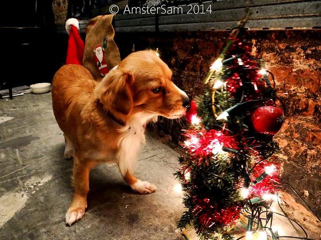 .Christmas, Ho, Ho, Ho!