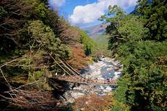Iya-no-Kazura Bashi (Jake in Japan) Tags: bridge autumn japan fallcolors sony wide foliage    tokushima ropebridge  kazurabashi  vinebridge iyavalley  apsc  westiya   sel1018 sonye1018mmf40oss jakejung