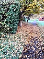 autumn(fall)