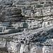 Calcarenitic eolianite (Hanna Bay Member, Rice Bay Formation, Holocene; Graham's Harbour, San Salvador Island, Bahamas) 10