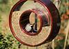 new bird feeder (champbass2) Tags: texture northerncalifornia birdfeeder migratory birdfood whitecrownedsparrow backyardbirding champbass2 wintermigration aonotrichialeucophyrs