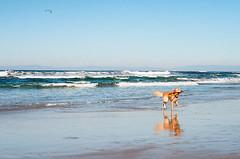 (Lieye) Tags: california sea dog film beach canon eos monterey kodak ektar