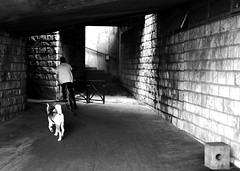 By running behind the bike (pascalcolin1) Tags: light shadow dog chien bike noiretblanc lumire tunnel ombre chanel vlo streetview paris13 photoderue blackandwithe urbanarte photopascalcolin