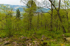 Felsenmeer 1 (JBsLightAndShadow) Tags: trees mountain berg rock forest nikon rocks hiking sigma steine heidelberg fels wald stein wandern felsen felsenmeer knigstuhl seaofrocks d3300