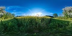 Reinfeld Rapsfeld (HamburgerJung) Tags: panorama germany deutschland fisheye panasonic walimex schleswigholstein holstein frhling rapsfeld hugin equirectangular reinfeld gm5