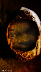 nuts 2016 (R-Pe) Tags: show camera abstract canon photo nikon foto fotografie photographie sony picture pic exhibition peter gift bild geschenk ausstellung aufnahme melancholie 1764 rpe rbi 1764org www1764org