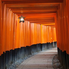 Galleria di torii (iremagi) Tags: japan inari torii giappone galleria marcogiunta