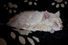 Rainy Day Blues Continued (Alex M. Wolf) Tags: cats cat feline fuji sid gato katze gatto sidney kater cato felin felidae alexmwolf xe2s