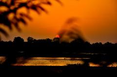 Sunset (connectchintan) Tags: sunset orange plants sun water river flowingwater