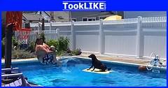 น้องหมาทรงตัวได้เยี่ยมมาก หลังเจอกับคลื่นยักษ์ (tooklikedotcom) Tags: คลื่นยักษ์ ทรงตัว สุนัข