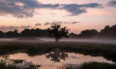 Misty landscape (RuneKC) Tags: sunset mist lake tree nature fog landscape denmark pond hill deerpark dyrehaven