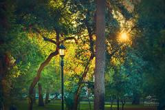 Farol en crepusculo (Diez Visualcreativo) Tags: chile plaza parque santiago photoshop atardecer arboles farol forestal photoshopcreativo visualcreativo