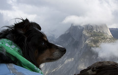 Ruthie: Queen of Yosemite :) (Life_After_Death - Shannon Day) Tags: california park dog mountain mountains cold history nature rock clouds scarf canon puppy wonder landscape outdoors photography eos nationalpark natural outdoor nevada sierra national yosemite dome half granite historical chilly yosemitenationalpark dslr monolith canondslr canoneos lifeafterdeath 50d shannonday canoneos50d eosdslr canoneos50ddslr lifeafterdeathstudios lifeafterdeathphotography shannondayphotography shannondaylifeafterdeath lifeafterdeathstudiosartandphotography shannondayartandphotography