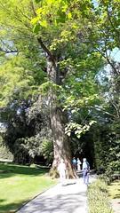 isole borromee (18) (giangian239) Tags: lago acqua blu giardino maggiore albero verde prato statua monumento isola isole borromee madre bella superiore panorama paesaggio lungolago