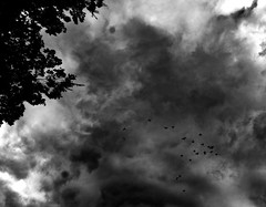 (MattTomas) Tags: blackandwhite portland pdx light shadow contrast sky fujifilm xt10 birds clouds flight