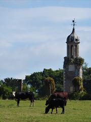 Clock Tower (Gilder Kate) Tags: cranleigh rudgwick ewhurst surrey baynardspark remains ruins clocktower cows park panasoniclumixdmctz70 panasoniclumix panasonic lumix dmctz70 tz70