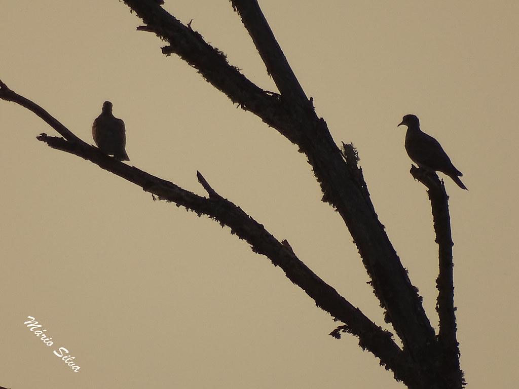 Águas Frias (Chaves) - ... rolas bravas descansando ao fim do dia ...