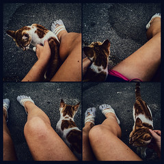 Simple pleasures are the best (Melissa Maples) Tags: antalya turkey trkiye asia  apple iphone iphone6 cameraphone square 11 multipanel tetraptych me melissa maples selfportrait woman shoes fivefingers vibram feet legs animal kitty cat summer morning