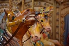 Chile travel 2016 (Gotham Fer) Tags: chile santiago viaje travel nikon nikonistas d5300 carrousel horses caballo calesita color camera
