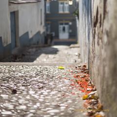 Autumn (Capturedbyhunter) Tags: fernando caador marques fajarda coruche ribatejo santarm portugal pentax k1 revuenon 112 12 f12 55mm 55 depth field profundidade de campo bokeh autumn outono outdoor escadas manual focus focagem foco travessa do castelo pentaxart