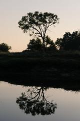 20160827_ZambeziReflections_MCM-2 (mcmessner) Tags: africa bw bjadventures livingston reflection river silouette southafrica2016 sunrise sunriseboatride tongabezilodge zambeziriver zambia livinstone