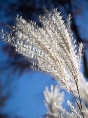 Fluff (@Michael) Tags: fall nature gear olympus pro 28 em1 1240mm olympus124028